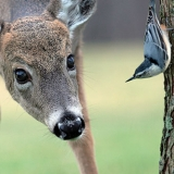 Observant Deer Avatar