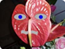 Bacuda Avatar