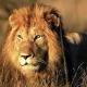 LionHD Avatar